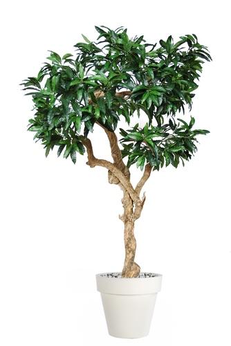 Mango Nidra 250 cm Green